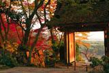 京都地蔵禅院 ツワブキと薬医門
