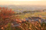 京都地蔵禅院 ススキと井手の里