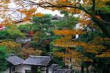 京都 左阿弥の紅葉