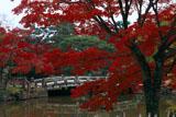 円山公園 紅葉と瓢箪池