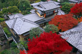 大雲院 祇園閣から紅葉と書院