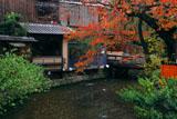 紅葉の祇園白川