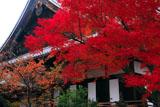 清浄華院 紅葉と御影堂