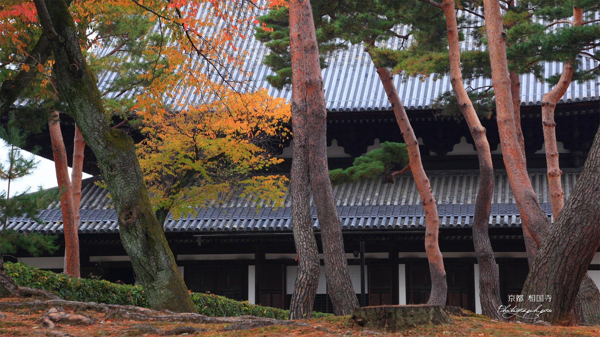 相国寺 赤松と紅葉に法堂