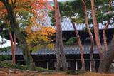 相国寺 紅葉と法堂
