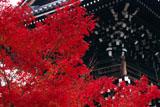 相国寺 紅葉と鐘楼