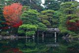 京都御所 御池庭の紅葉と石橋