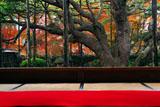 大原寺宝泉院 紅葉の額縁庭園