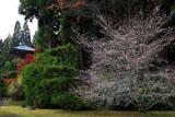 苔寺 冬桜と三重納経塔