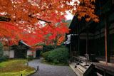 苔寺 紅葉と観音堂