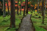 苔寺 参道と紅葉