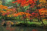 苔寺 紅葉と黄金池の舟