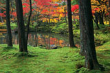 苔寺 黄金池畔の紅葉