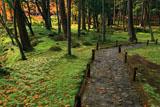苔寺 120余種の苔