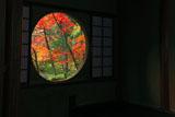苔寺 吉野窓越しの紅葉