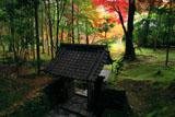 苔寺 向上関と紅葉