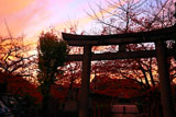 六孫王神社 桜紅葉と夕焼け