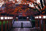 六孫王神社 桜紅葉と参道の燈籠灯り