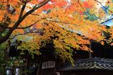 粟田神社 黄葉の本殿
