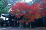 粟田神社 紅葉と本殿