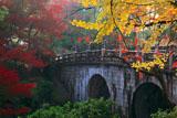 大谷本廟 紅葉の石橋