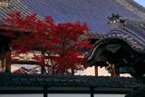 大谷本廟 紅葉と仏殿