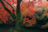 清水寺成就院 池畔の紅葉
