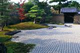 大徳寺芳春院 花岸庭の桜紅葉