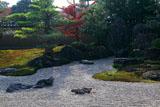 大徳寺芳春院 枯山水庭園のツワブキ