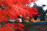 大徳寺芳春院 紅葉と高林庵鐘楼
