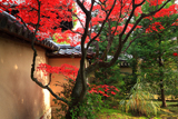 大仙院 前庭の紅葉