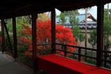 大徳寺総見院 廊下越しのドウダンツツジ