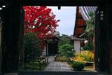 大徳寺興臨院 表門越しの紅葉と唐門