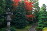 大徳寺龍源院 石燈籠と紅葉