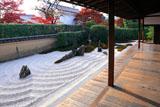 大徳寺瑞峯院 方丈から独坐庭と紅葉