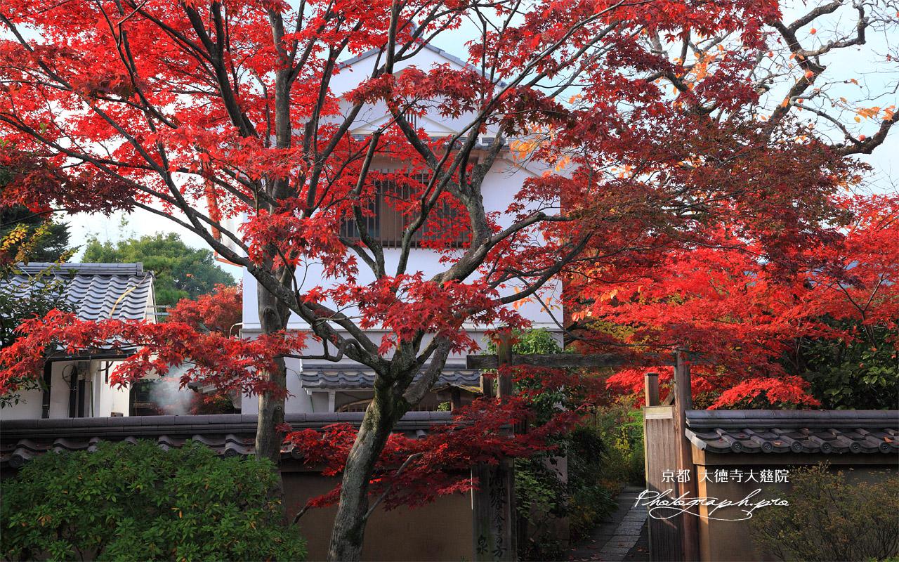 大慈院 紅葉と冠木門 壁紙