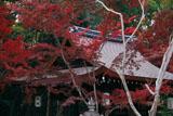 梨木神社 紅葉と拝殿