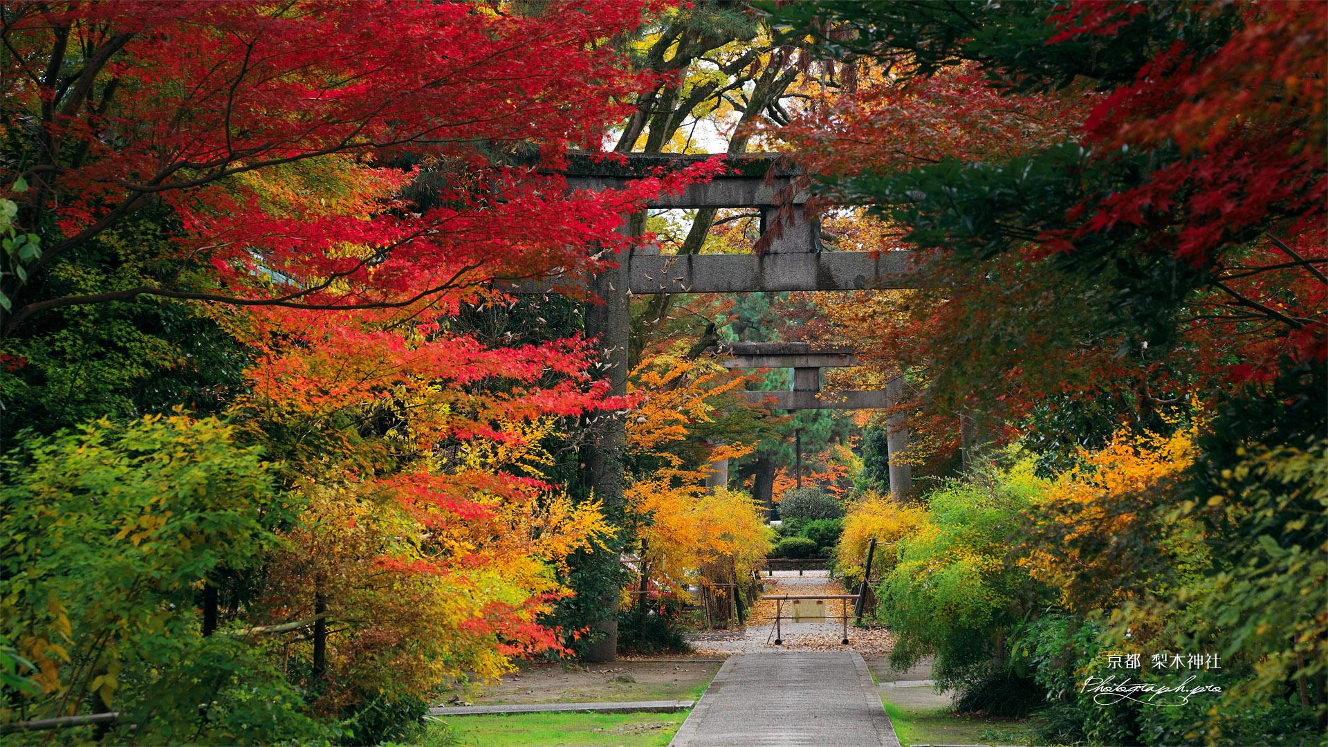 梨木神社 紅葉の参道 の壁紙 19x1080