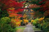 梨木神社 紅葉の参道