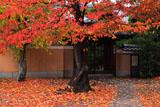 桜紅葉と妙蓮寺本妙院