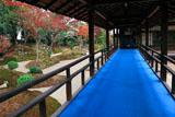 立本寺 紅葉の西庭