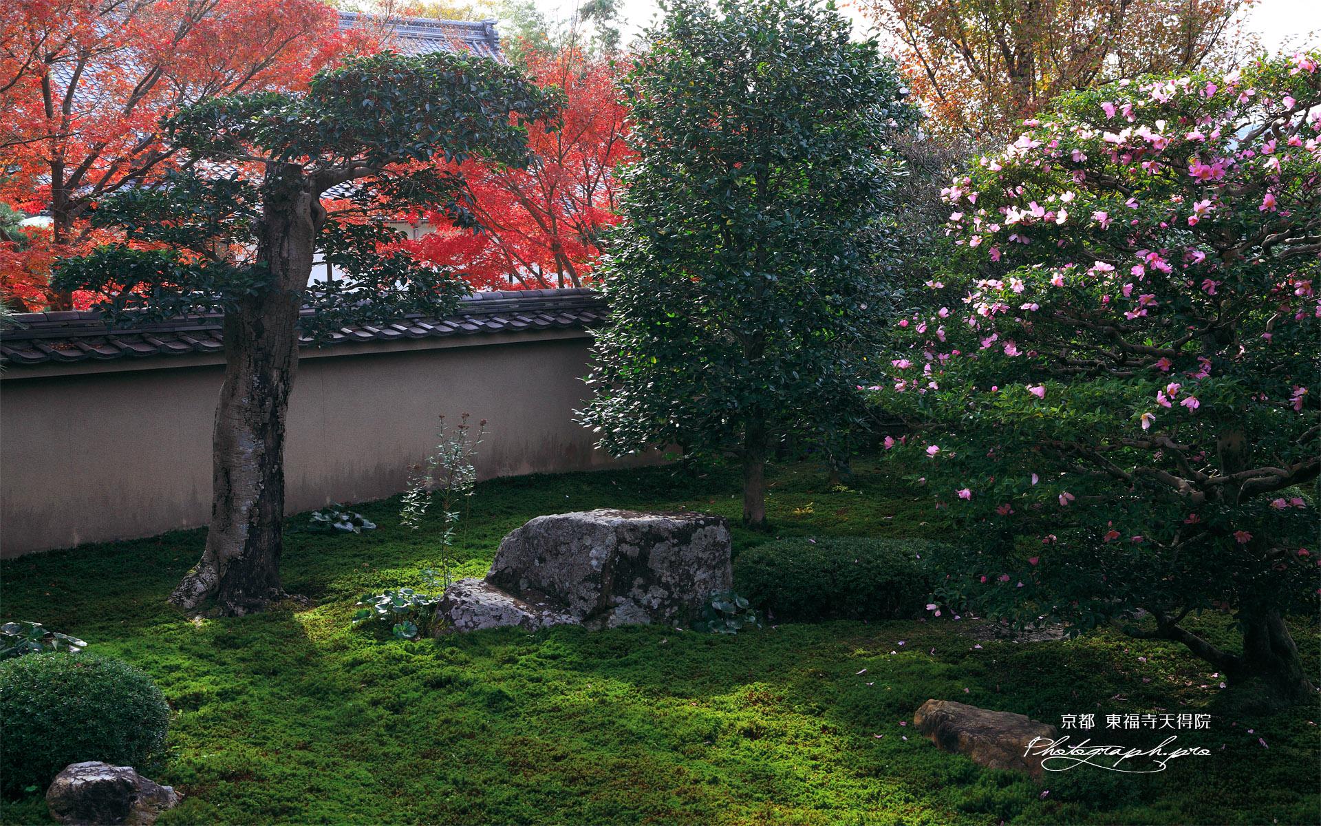 天得院 山茶花と紅葉