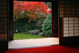 天得院 方丈から紅葉の西庭