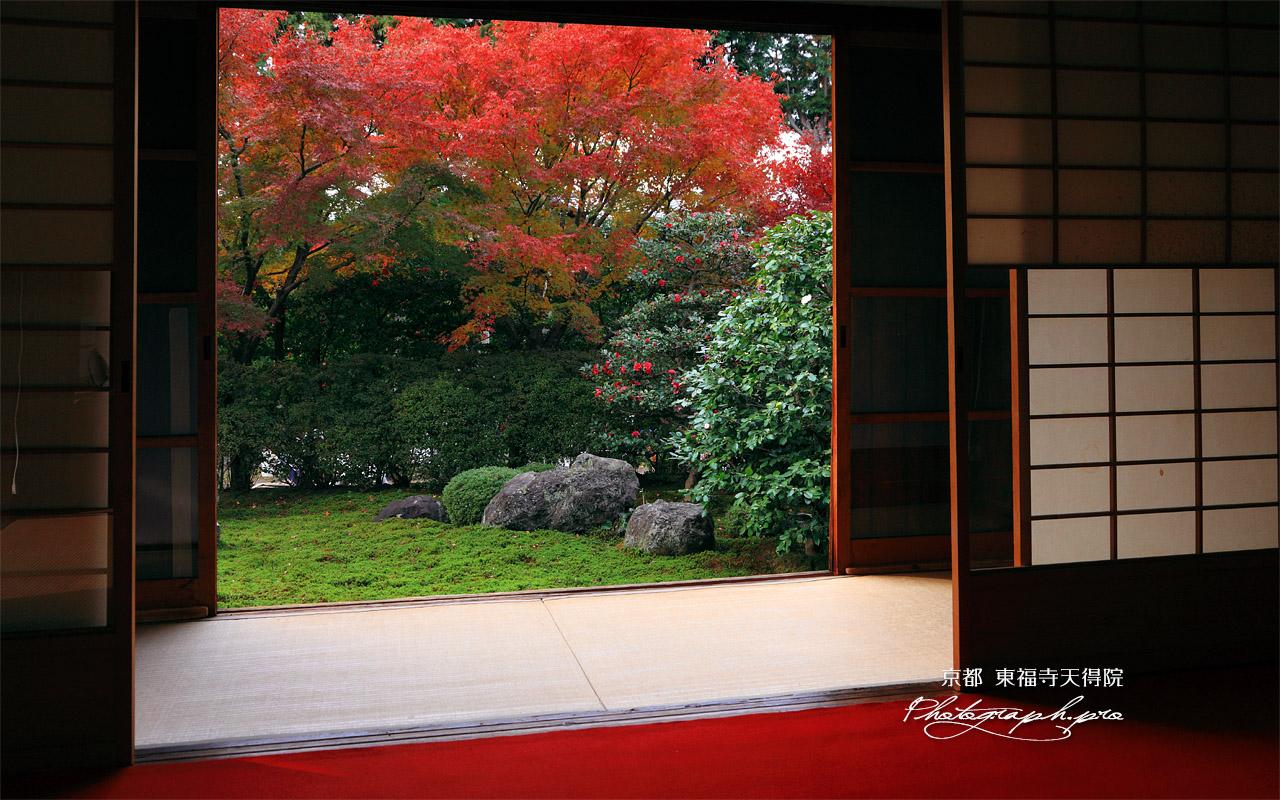 天得院 方丈から紅葉の西庭 壁紙