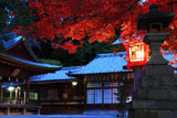 三宅八幡宮 紅葉と拝殿