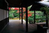 本法寺 書院からの紅葉の巴の庭