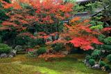 本法寺 紅葉の巴の庭