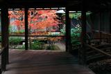 本法寺 渡り廊下からの紅葉