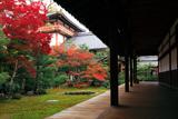 本法寺 紅葉の巴の庭と涅槃会館