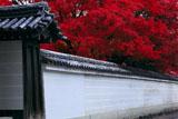 宝鏡寺 白壁と紅葉